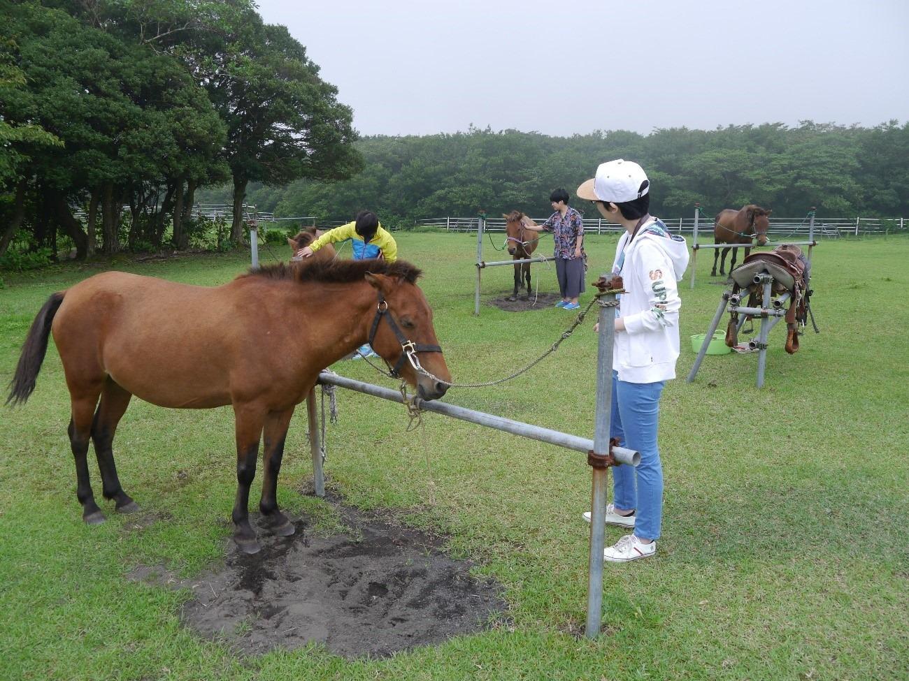 馬とふれあい